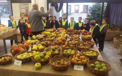 1. razred na razstavi sadja v MC Metlika